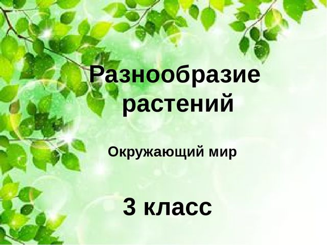 Разнообразие растений Окружающий мир 3 класс