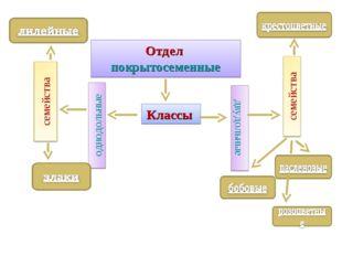 Отдел покрытосеменные Классы однодольные двудольные