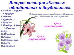 Предложенные растения разделить на две группы: класс Однодольные и класс Двуд