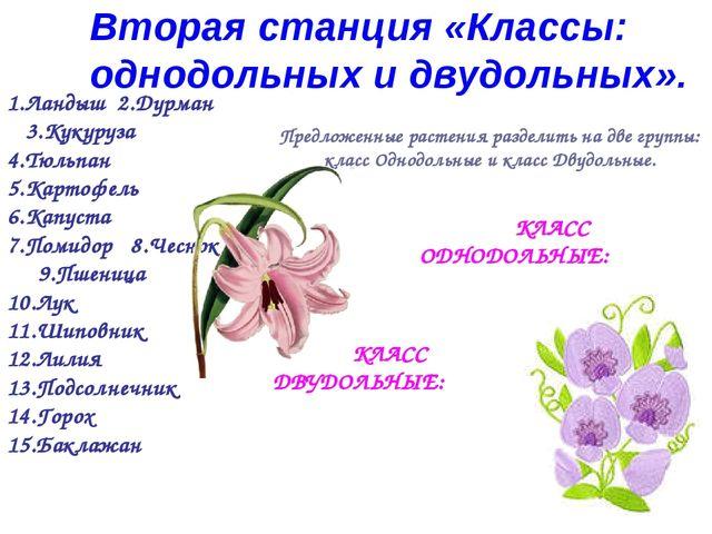 Предложенные растения разделить на две группы: класс Однодольные и класс Двуд...