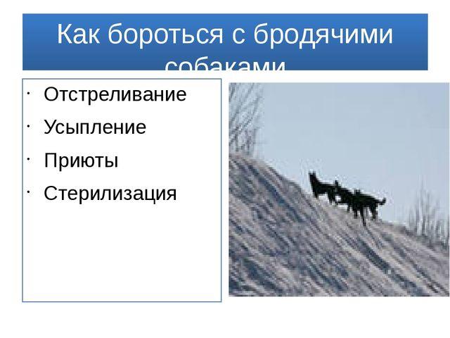 Как бороться с бродячими собаками Отстреливание Усыпление Приюты Стерилизация