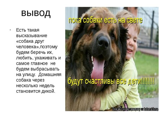вывод Есть такая высказывание «собака друг человека»,поэтому будем беречь их,...
