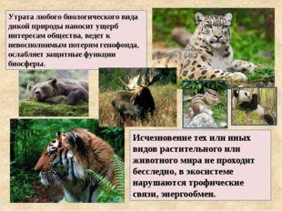 Исчезновение тех или иных видов растительного или животного мира не проходит