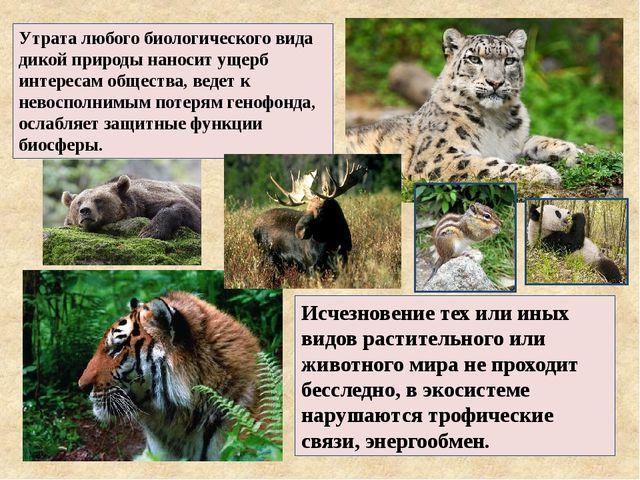 Исчезновение тех или иных видов растительного или животного мира не проходит...
