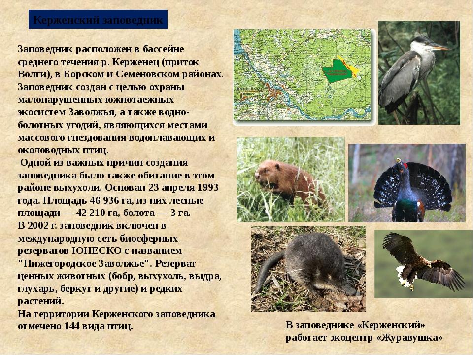 Керженский заповедник Заповедник расположен в бассейне среднего течения р. Ке...
