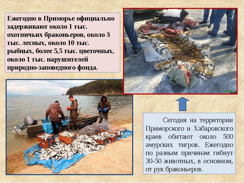 Ежегодно в Приморье официально задерживают около 1 тыс. охотничьих браконьеро...