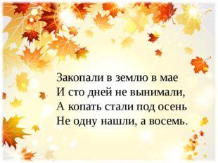 Закопали в землю в мае И сто дней не вынимали, А копать стали под осень Не од