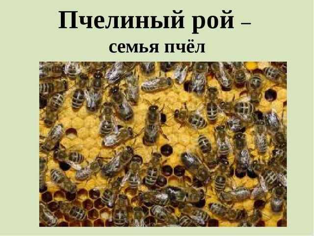 Пчелиный рой – семья пчёл