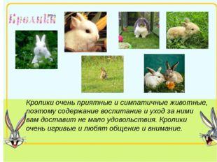 Кролики очень приятные и симпатичные животные, поэтому содержание воспитание