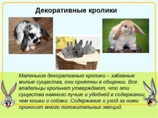 Декоративные кролики Маленькие декоративные кролики – забавные милые существ
