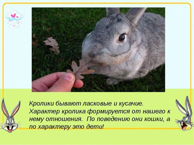 Кролики бывают ласковые и кусачие. Характер кролика формируется от нашего к н...