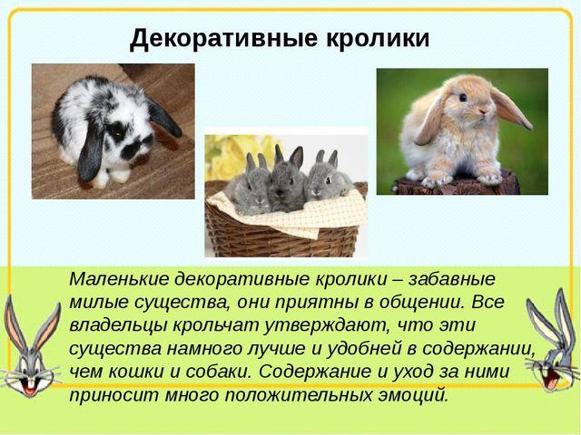 Декоративные кролики Маленькие декоративные кролики – забавные милые существ...