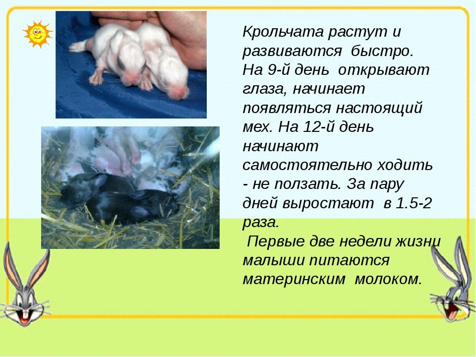 Крольчата растут и развиваются быстро. На 9-й день открывают глаза, начинает...