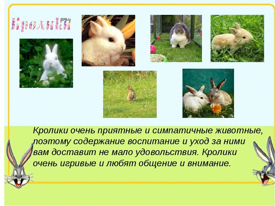 Кролики очень приятные и симпатичные животные, поэтому содержание воспитание...