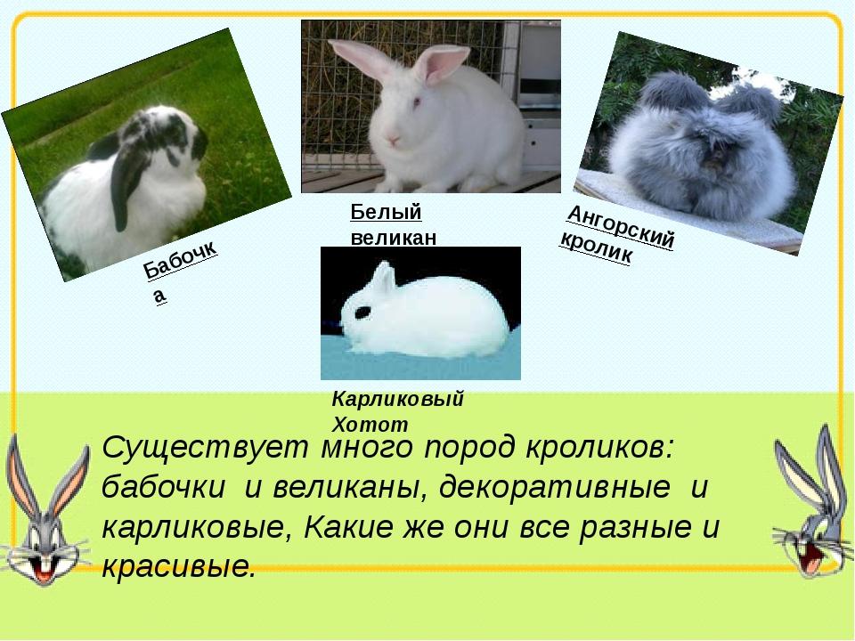 Существует много пород кроликов: бабочки и великаны, декоративные и карликов...