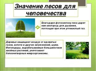 Значение лесов для человечества Благодаря фотосинтезу леса дарят нам кислород