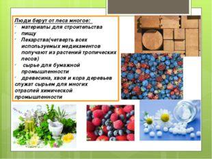 Люди берут от леса многое: материалы для строительства пищу Лекарства(четверт
