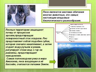 Леса являются местами обитания многих животных, это самые настоящие кладовые