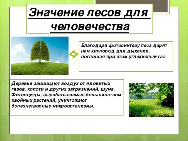 Значение лесов для человечества Благодаря фотосинтезу леса дарят нам кислород...