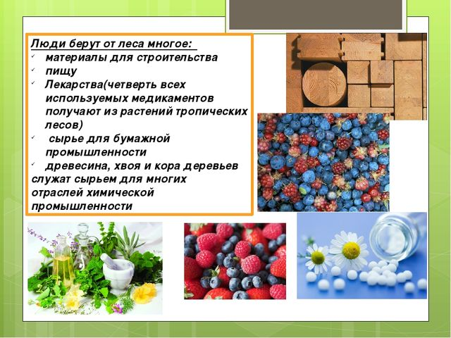 Люди берут от леса многое: материалы для строительства пищу Лекарства(четверт...