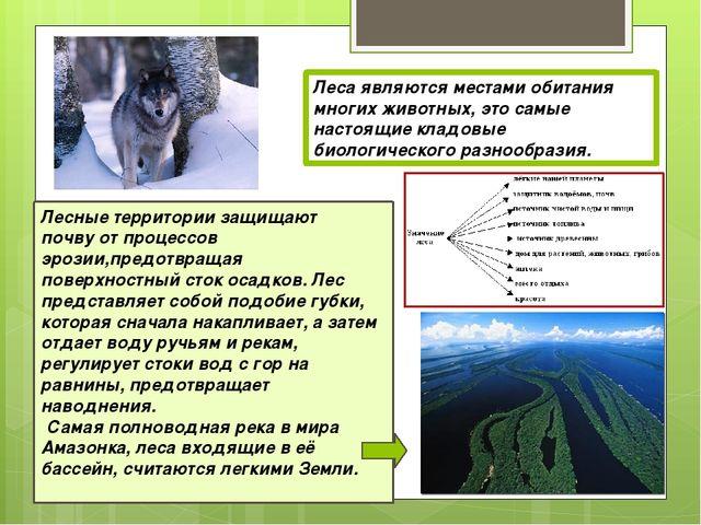 Леса являются местами обитания многих животных, это самые настоящие кладовые...