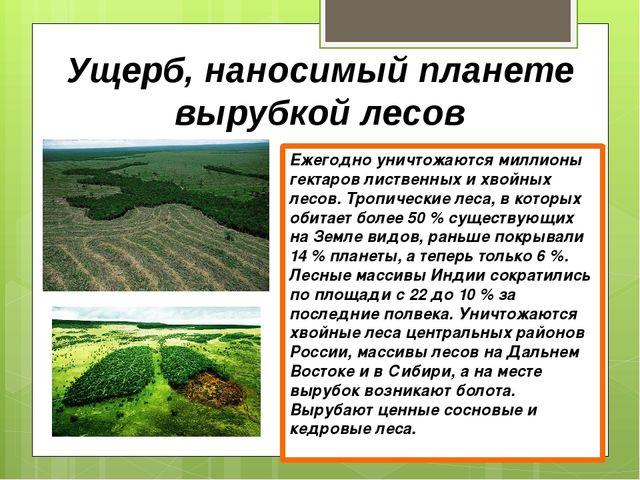 Ущерб, наносимый планете вырубкой лесов Ежегодно уничтожаются миллионы гектар...
