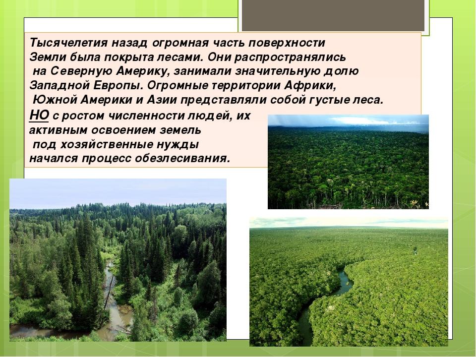 Тысячелетия назад огромная часть поверхности Земли была покрыта лесами. Они р...