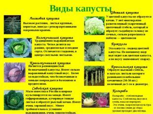 Виды капусты Листовая капуста Краснокочанная капуста Белокочанная капуста Сав