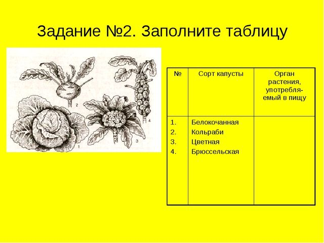 Задание №2. Заполните таблицу №Сорт капустыОрган растения, употребля-емый в...