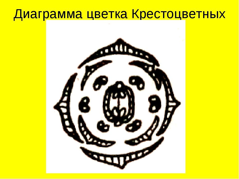 Диаграмма цветка Крестоцветных