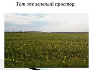Тот же зеленый простор.