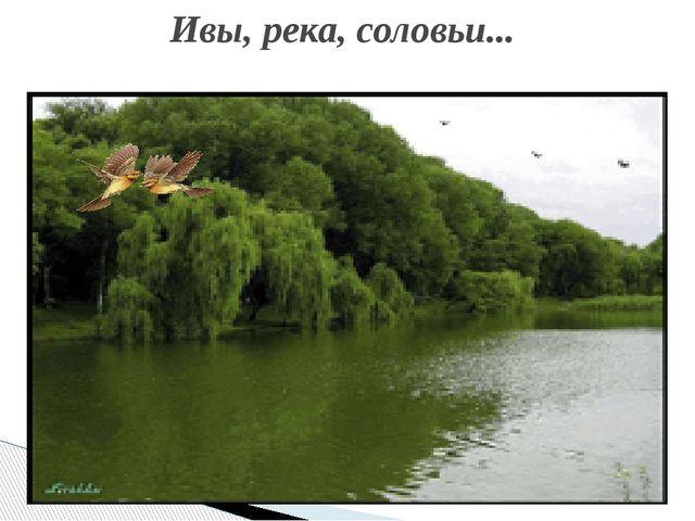 Ивы, река, соловьи...