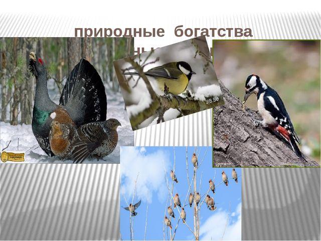 природные богатства лесные птицы