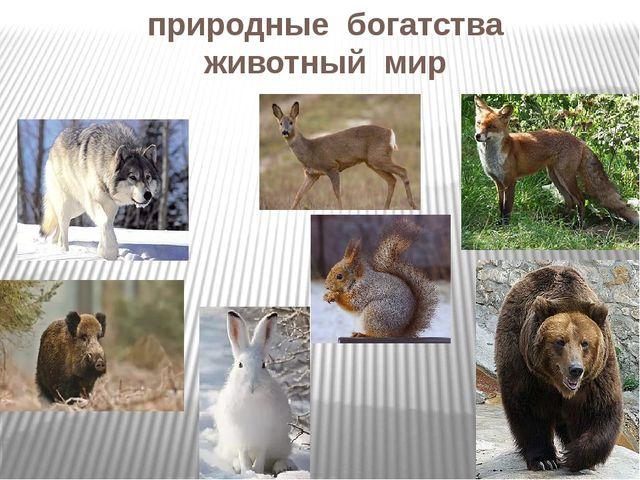 природные богатства животный мир
