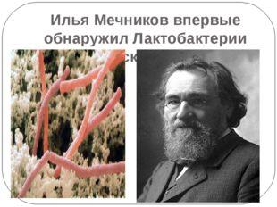 Илья Мечников впервые обнаружил Лактобактерии (болгарские палочки)