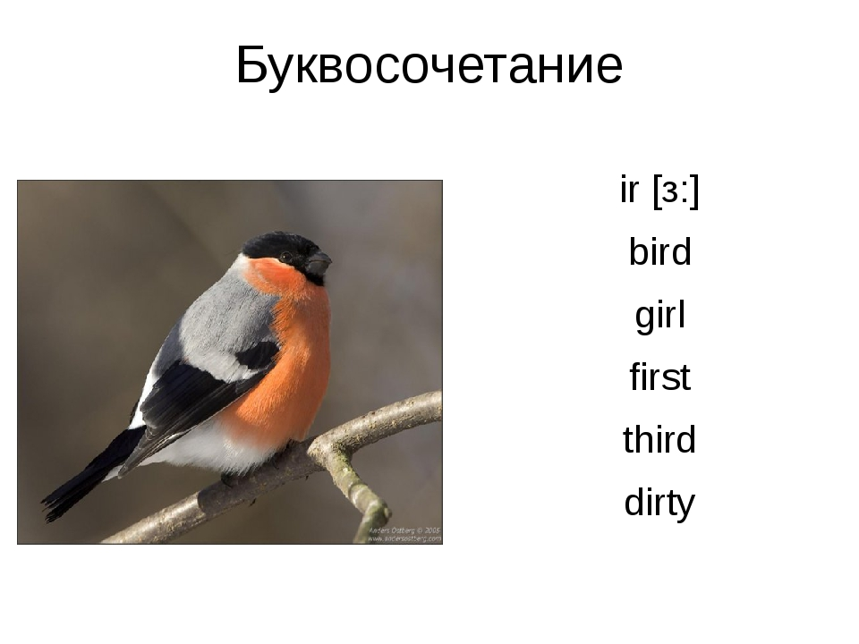 Буквосочетание ir [з:] bird girl first third dirty