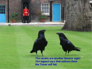 The ravens are another famous sight. The legend says that without them the To