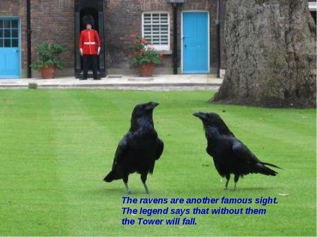 The ravens are another famous sight. The legend says that without them the To...