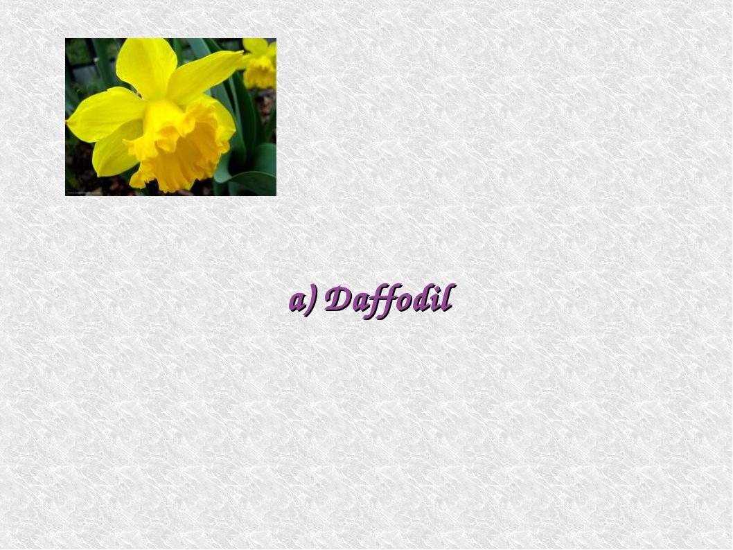 a) Daffodil