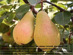 Груша отличается от других фруктов своею сочной, маслянистой мякотью, особым
