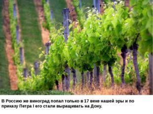 В Россию же виноград попал только в 17 веке нашей эры и по приказу Петра I ег