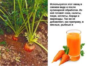Используется этот овощ в свежем виде и после кулинарной обработки. Из неё гот
