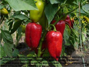 Перец - это многосемянной плод красного, оранжевого, жёлтого, зелёного или фи