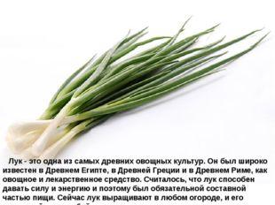 Лук- это одна из самых древних овощных культур. Он был широко известен в