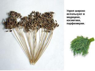 Укроп широко используют в медицине, косметике, парфюмерии.