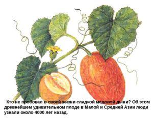 Кто не пробовал в своей жизни сладкой медовой дыни? Об этом древнейшем удив