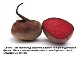 Свекла – это корнеплод округлой, плоской или цилиндрической формы . Мякоть п