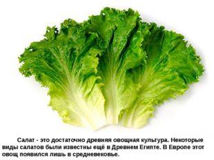 Салат - это достаточно древняя овощная культура. Некоторые виды сал