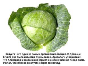 Капуста - это один из самых древнейших овощей. В Древнем Египте она была