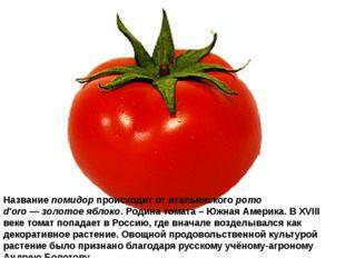 Названиепомидорпроисходит отитальянскогоpomo d'oro—золотое яблоко. Роди